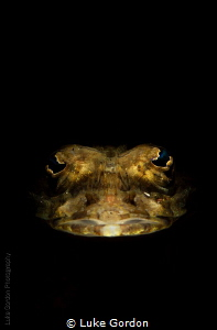 Snooted Flathead......peering out of the darkness by Luke Gordon