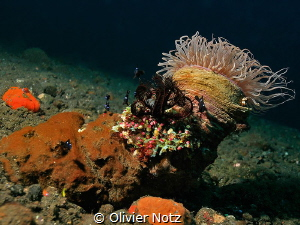Colorful grown over rock by Olivier Notz