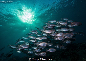 School of Big Eyes at Magic Hour by Tony Cherbas