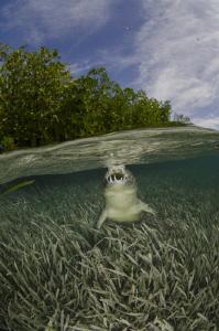 Undercover teeth by Dmitry Starostenkov