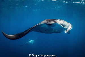 Hey, Wait For Me!