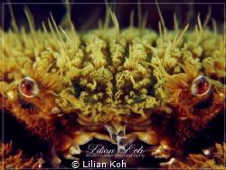 W R A T H Teddy Bear Crab by Lilian Koh
