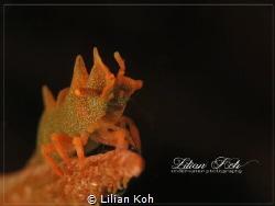 D R A G O N  Dragon Shrimp by Lilian Koh