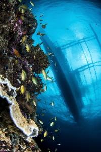 under the bangka (Pescador is.) by Mathieu Foulquié