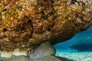 ~ On the Hunt ~  I was out snorkeling when I became awa... by Geo Cloete