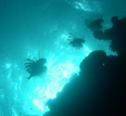 3 lionfish taken at Nabq Park, Sinai with Nikon Coolpix 4... by Nikki Van Veelen