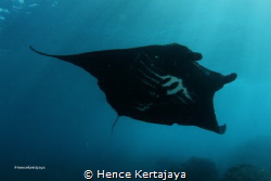 My initial M.... That is mean MANTA by Hence Kertajaya