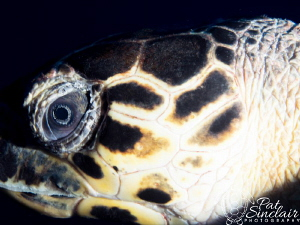On my last day of diving, I was set up for macro.  100+ f... by Patricia Sinclair