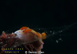 Ecology Aerodynamic Wind Test - Hypselodoris emma by Dennis Chen