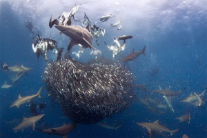 """""""The Order of Things"""" - Life in the ocean is so unknown, ... by Allen Walker"""