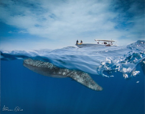 Over/Under on the move- the water was calm enough for spl... by Steven Miller