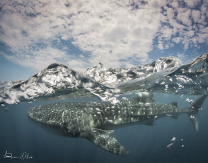 The waterline and shark are natural, but the clouds were ... by Steven Miller