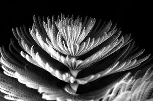 ~ Delicate Beauty ~  I wonder how many people, seeing o... by Geo Cloete
