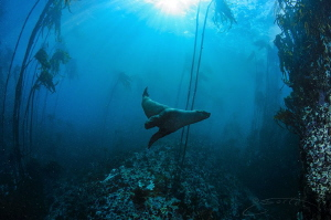 ~ What Happened Next ~  He became my dive buddy for the... by Geo Cloete