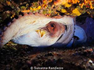 octopus eye by Susanna Randazzo