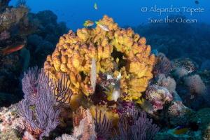 Colorfull Reef, El Morro México by Alejandro Topete