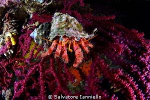 orange and red by Salvatore Ianniello