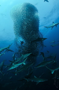 ~ Blue Vortex ~ In 2013, it was documented for the first... by Geo Cloete