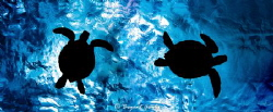 turtles at the surface by Byant Grady