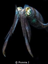 Knight Squid by Ponnie J