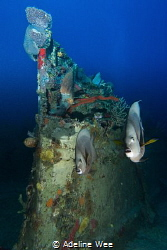 Friendly Grey Angels posing by the wreck by Adeline Wee