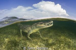 American crocodile split — Subal underwater housing, Zen... by Terry Steeley