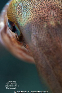 """""""Eye Of The Squid"""" No crop by Susannah H. Snowden-Smith"""