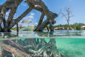 Surface interval in the mangroves by Mathias Weck