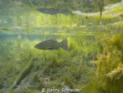 50cm deep water... and than this. by Kenny Schneider