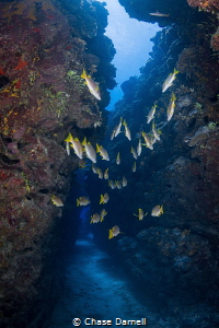 """""""The Hallway"""" Schoolmaster Snapper leading the way throu... by Chase Darnell"""