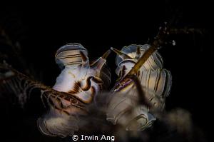 L O V E . S T O R Y Nudibranch (Doto greenamyeri) Tulam... by Irwin Ang