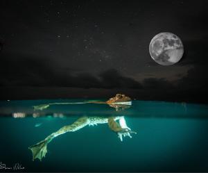 Imagine by Steven Miller