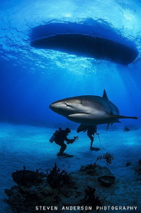 This Reef Shark comes into meet me as I settle to the bot... by Steven Anderson