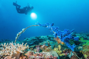 Coral with diver by Mathias Weck