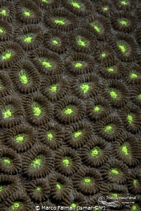 Yellow-green Coral Abstract by Marco Faimali (ismar-Cnr)