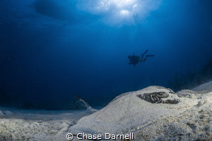 """""""Slumber"""" A resting Southern Stingray almost completely ... by Chase Darnell"""