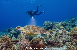Turtle with diver by Mathias Weck