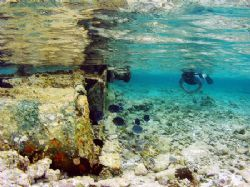 Snorkelling a wreck on The Belize Barrier Reef. by Martin Spragg
