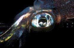 The Eye. NikonF90x, velvia 50, !05 macro , two strobo ttl... by Marchione Giacomo