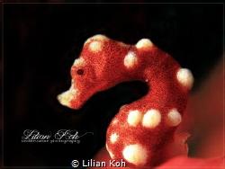 D E N I S E Hippocampus denise by Lilian Koh