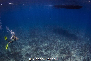 """""""Clarity"""" Some days the visibility here in Cayman really... by Chase Darnell"""