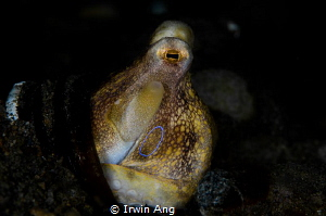 T H E . R I N G