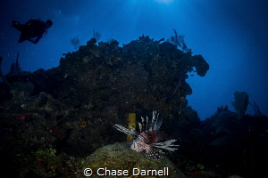 """""""The Den"""" My favorite shot of the invasive Lion Fish. We... by Chase Darnell"""