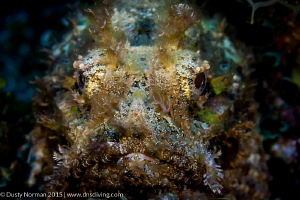 """""""Face Paint"""" This Scorpion Fish was in the perfect spot ... by Dusty Norman"""