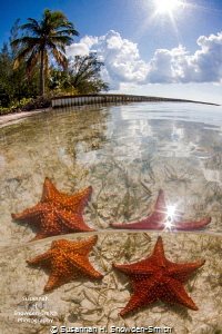 """""""Starry Starry Day""""  Starfish Point, Grand Cayman  The... by Susannah H. Snowden-Smith"""