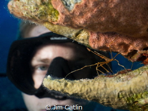 'Crab Hair Day' - diver looking at an arrow crab nestled ... by Jim Catlin