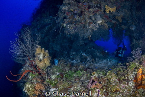 """""""The Swim Through""""  A Diver tunes in for some macro shoo... by Chase Darnell"""