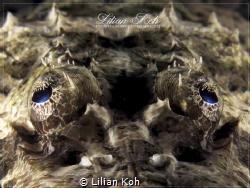 C R O C O D I L E  Crocodile Flathead by Lilian Koh