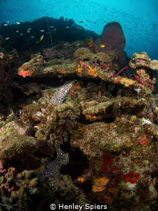Lucian Reef by Henley Spiers