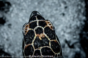 """""""Turtle Eye View"""" Swimming with the turtles. by Dusty Norman"""